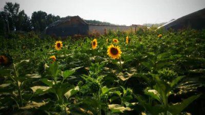 """Rural Mix 2017:""""Winter Garden"""" was held successfully in Beijing"""